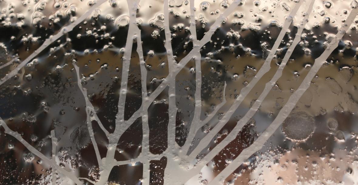 Décor sur verre motif de branches
